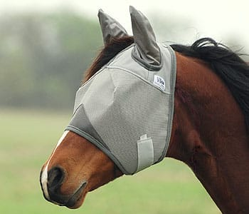 flymask with ears